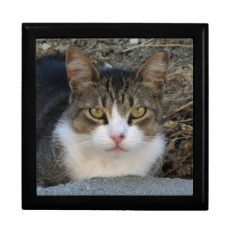 Big Boy Cat's Green Eyes Jewelry Box