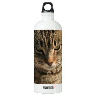 Big Boy Tabby Tom Cat Water Bottle