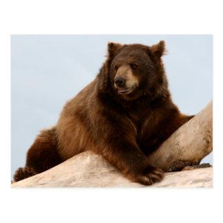 Big Brown Bear on a Log Postcard