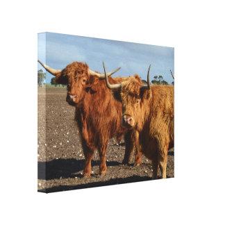 Big Brown Highland Cow, Canvas Print