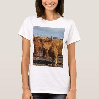 Big_Brown_Highland_Cows,_ T-Shirt