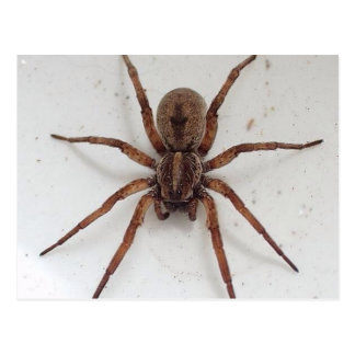big brown scarygothic looking spider post cards