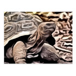 big brown turtle painting postcard