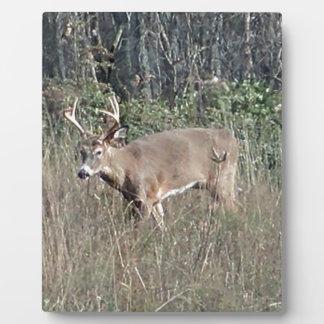 Big buck by james potvin plaque