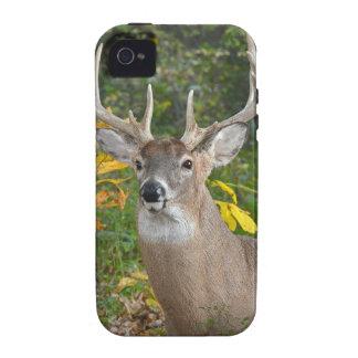 Big Buck Case-Mate iPhone 4 Case