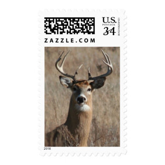 Big Buck Deer in Tall Grass Camo Postage Stamp