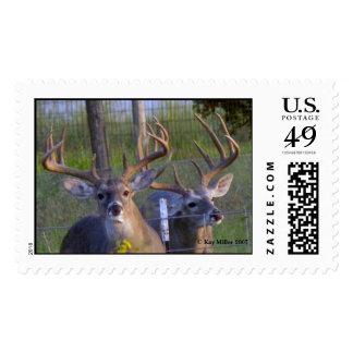 BIG BUCKS,  Kay Miller 2007 Stamps