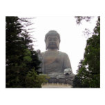 big buddha trees post cards