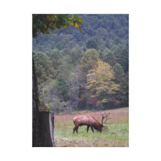 Big Bull Elk in the Autumn purple grass. Canvas Print