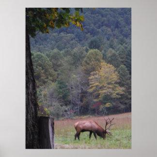 Big Bull Elk in the Autumn purple grass. Print
