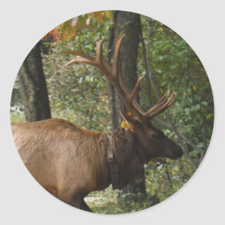 Big Bull Elk with Large Antler Classic Round Sticker
