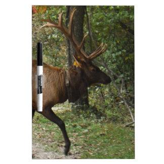 Big Bull Elk with Large Antler Dry Erase Whiteboards
