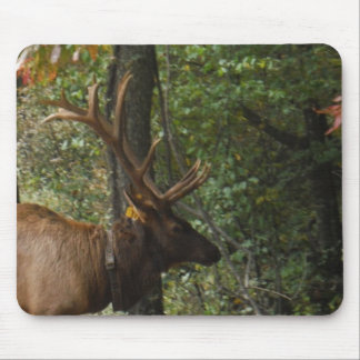 Big Bull Elk with Large Antler Mouse Pad