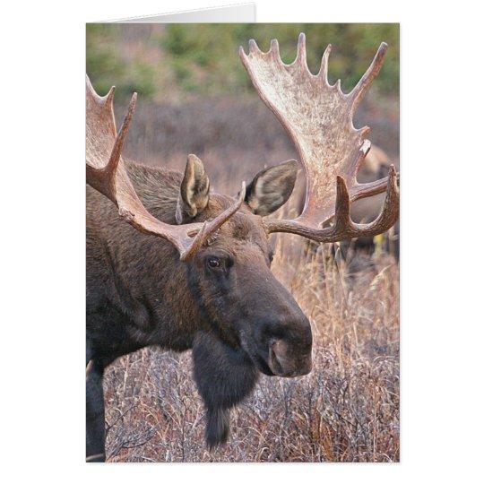 Big Bull Moose Card