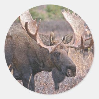 Big Bull Moose Classic Round Sticker