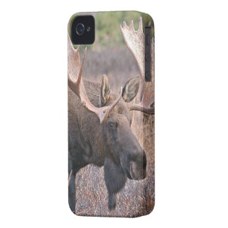Big Bull Moose iPhone 4 Case
