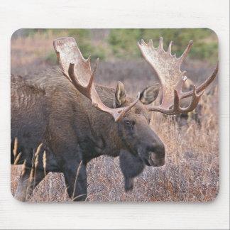 Big Bull Moose Mouse Pad