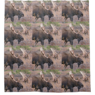 Big Bull Moose Shower Curtain