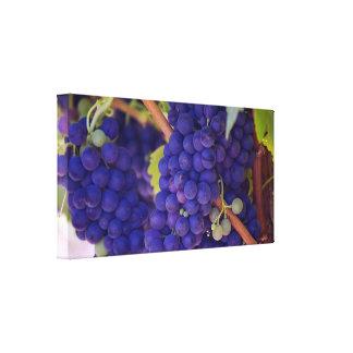 Big Bunch of Juicy Purple Grapes Canvas Print