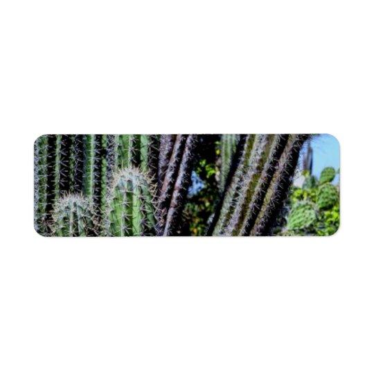 big cactus photo label