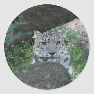 Big Cat Classic Round Sticker
