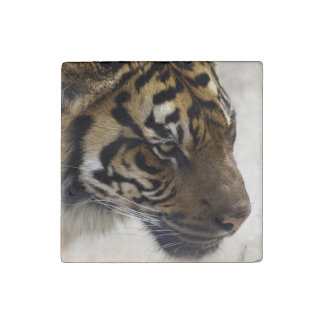 Big Cat Endangered Tiger Wildlife Photo Portrait 2 Stone Magnet