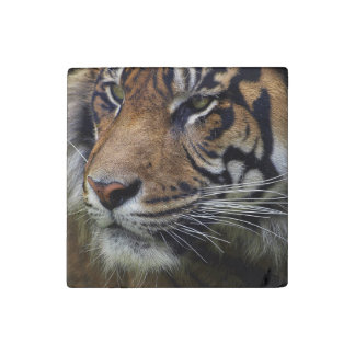 Big Cat Endangered Tiger Wildlife Photo Portrait 4 Stone Magnet