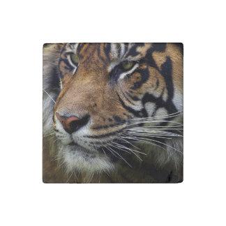 Big Cat Endangered Tiger Wildlife Photo Portrait 4 Stone Magnet