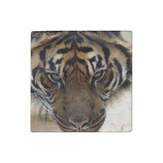 Big Cat Endangered Tiger Wildlife Photo Portrait Stone Magnet