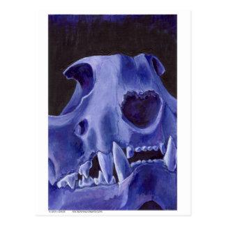 Big Cat Skull: Caracal Lynx study. Blue Postcard