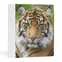 Big Cat Tiger Photo Mini Binder