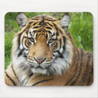 Big Cat Tiger Photo Mouse Pad