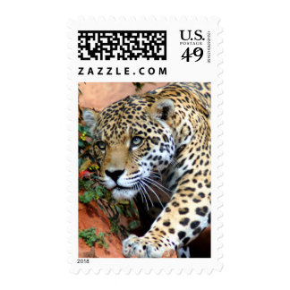 Big Cats - 10 Postage