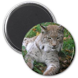 Big Cats - 11 Magnet