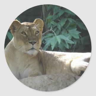 Big Cats  - 2 Classic Round Sticker