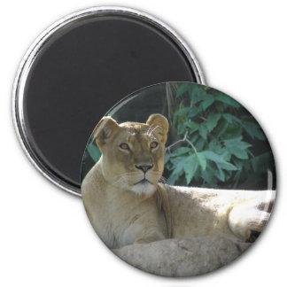 Big Cats  - 2 Magnet