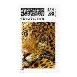 Big Cats  - 3 Postage Stamps
