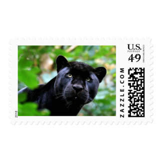 Big Cats - 4 Postage Stamp