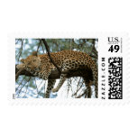Big Cats - 7 Postage Stamp