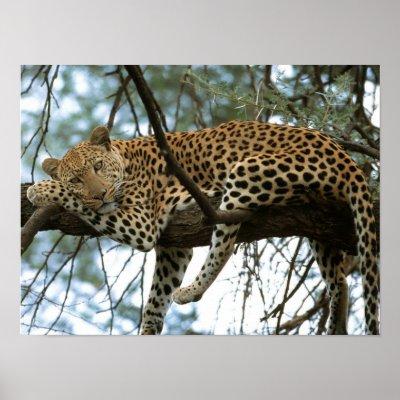Slike životinja - Page 5 Big_cats_7_poster-p228545557121249354t5wm_400