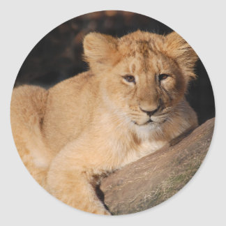Big Cats - 8 Classic Round Sticker