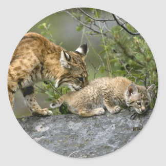 Big Cats - 9 Classic Round Sticker