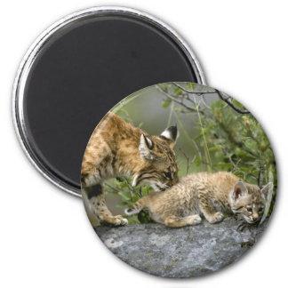 Big Cats - 9 Magnet