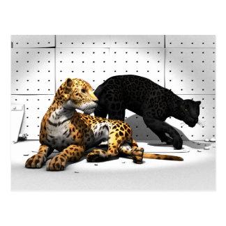 Big Cats - Leopards Postcard