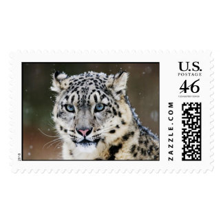 Big Cats Postage Card