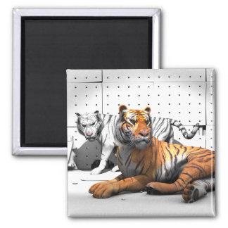 Big Cats - Tigers Magnet