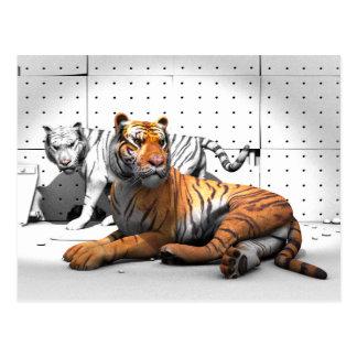 Big Cats - Tigers Postcard