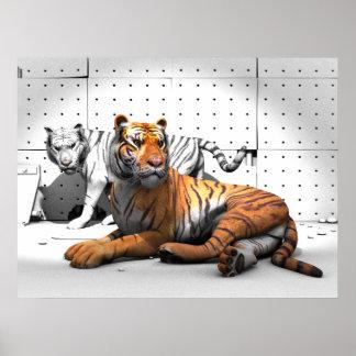 Big Cats - Tigers Poster