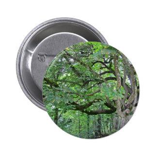 Big chestnut tree button