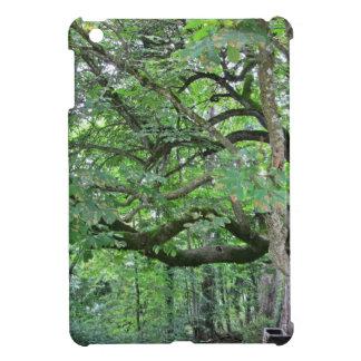 Big chestnut tree iPad mini case